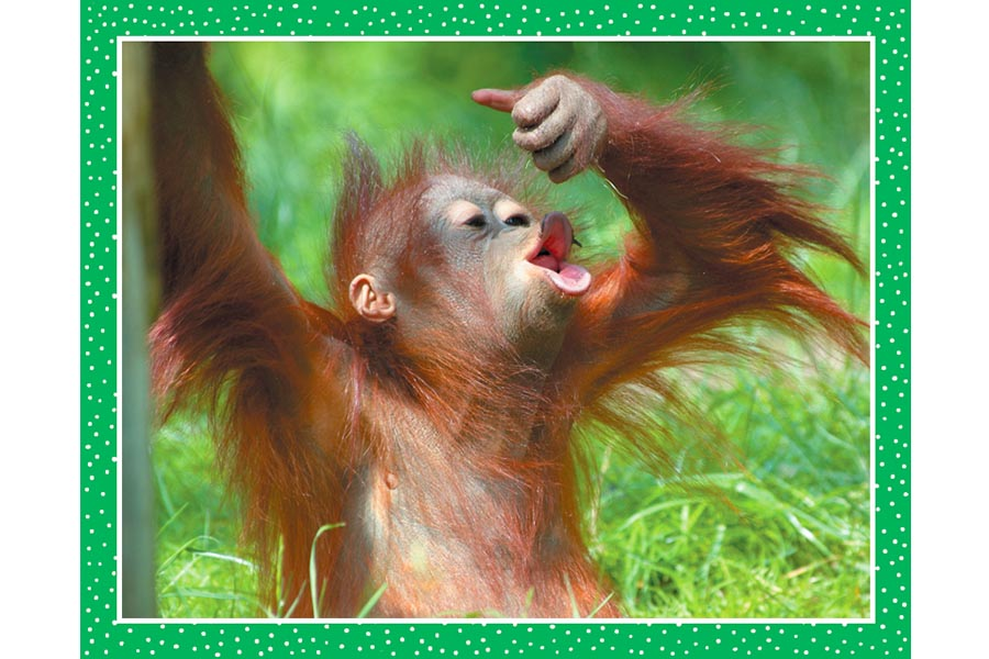 National Geographic and Topps launch new animal sticker collection for kids