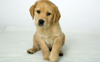 GUIDE DOGS JOINS BULLDOG LICENSING PORTFOLIO